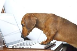 Dog Doing Research