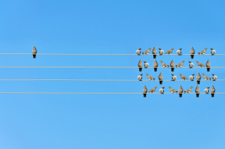 Individuality-concept -birds-on-a-wire-503081960_1261x835