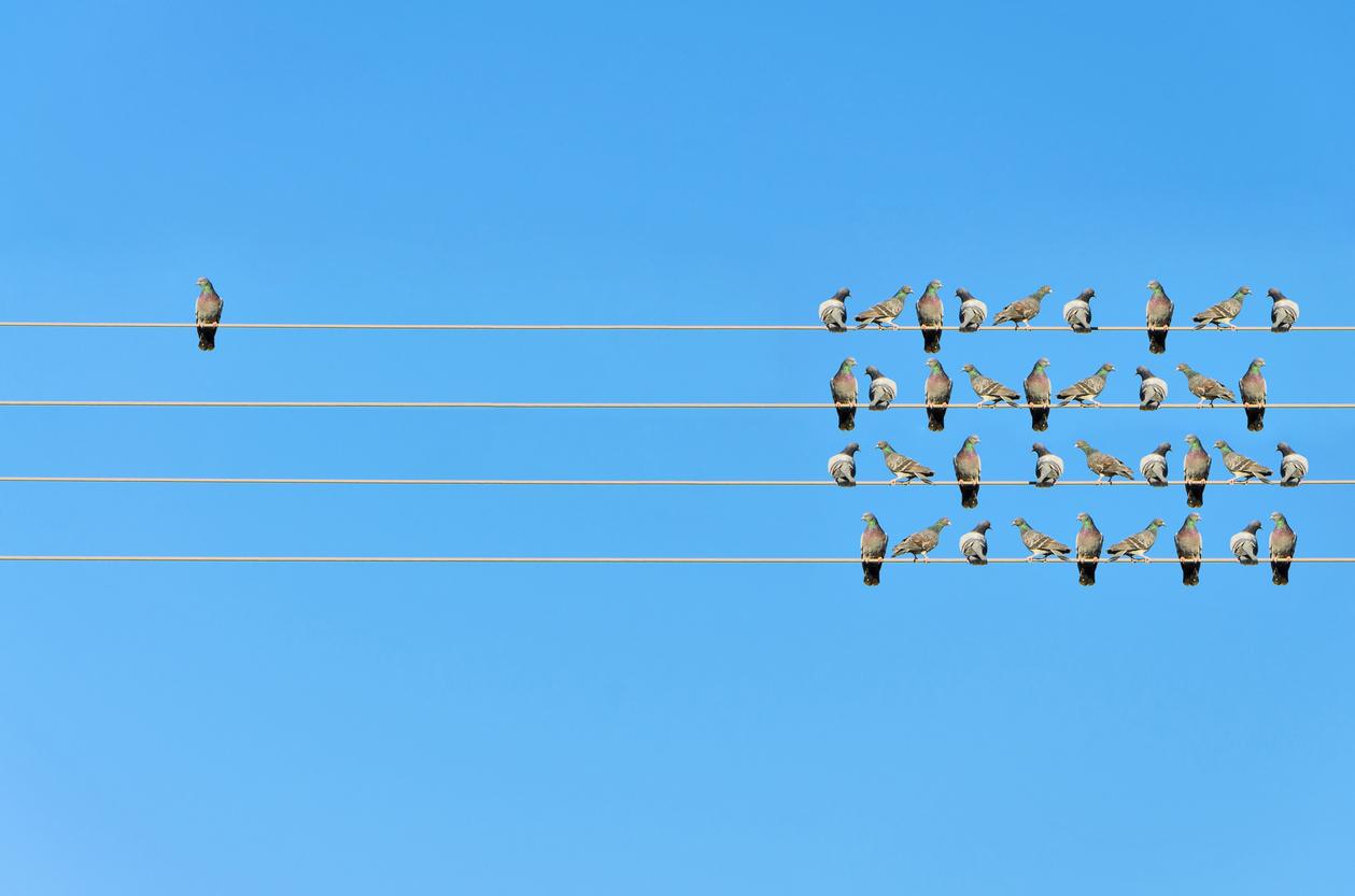 Individualityconcept Birdsonawire503081960_1261x835